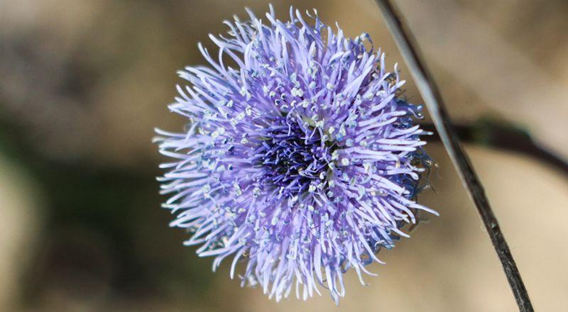 4 fotogalerías flora