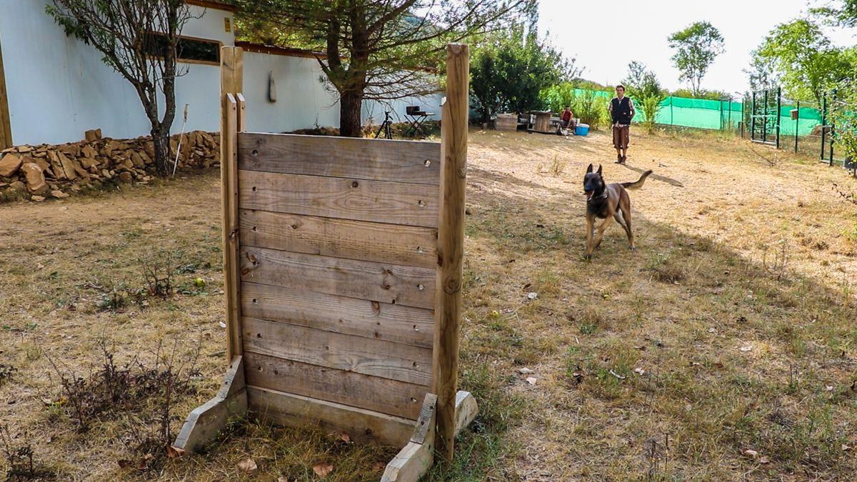 entrevista cesar reyes jacan residencia canina perros de rescate