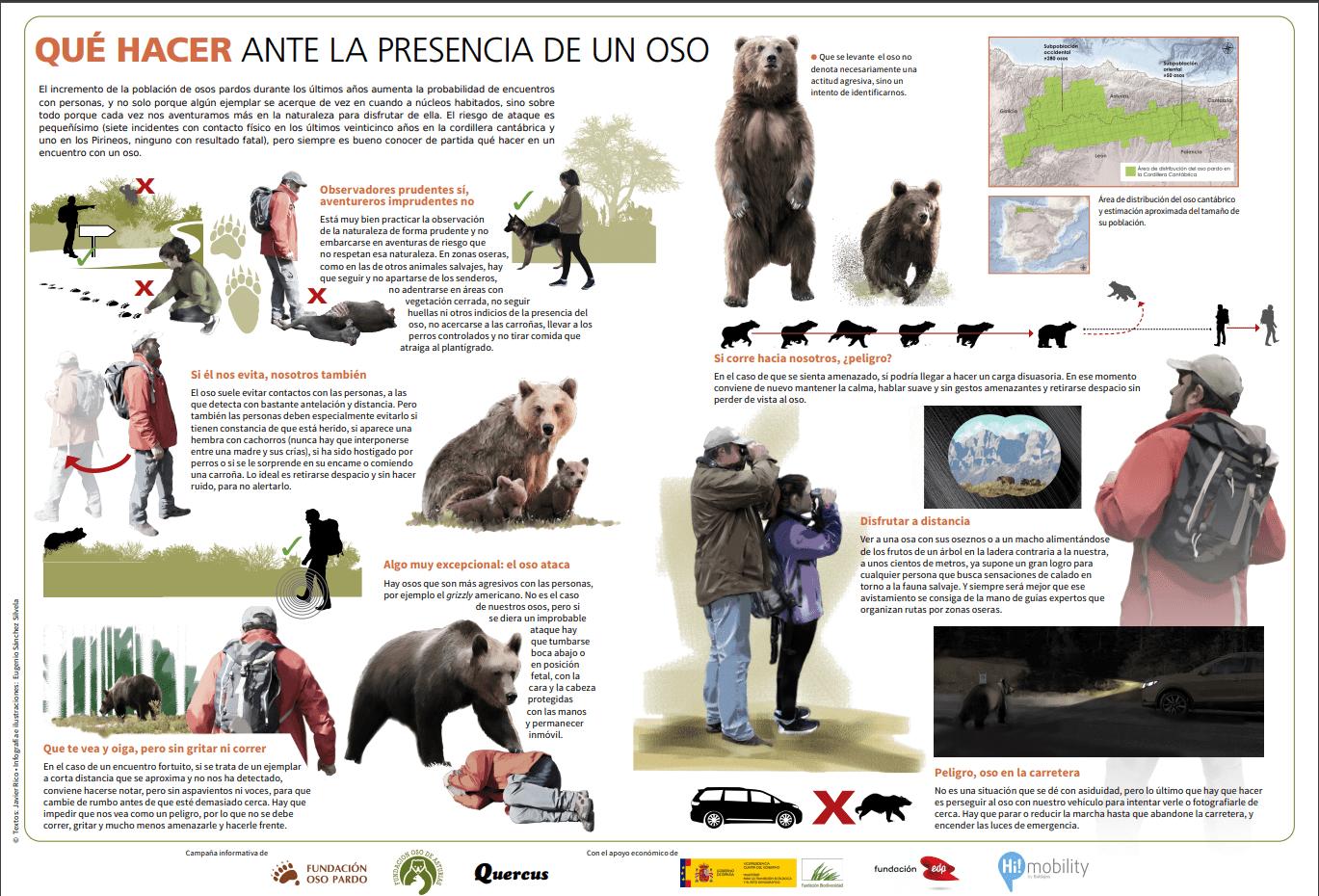 qué hacer ante la presencia encuentro oso