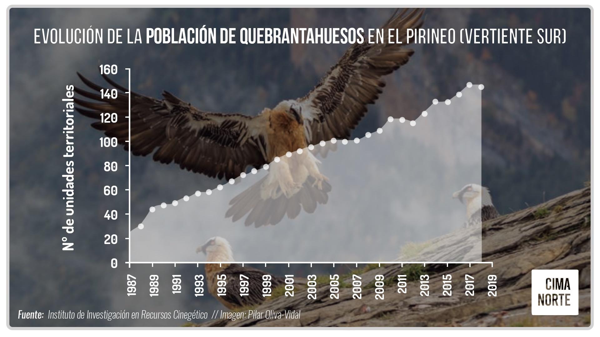 Evolución de la población de quebrantahuesos en el Pirineo (vertiente sur)