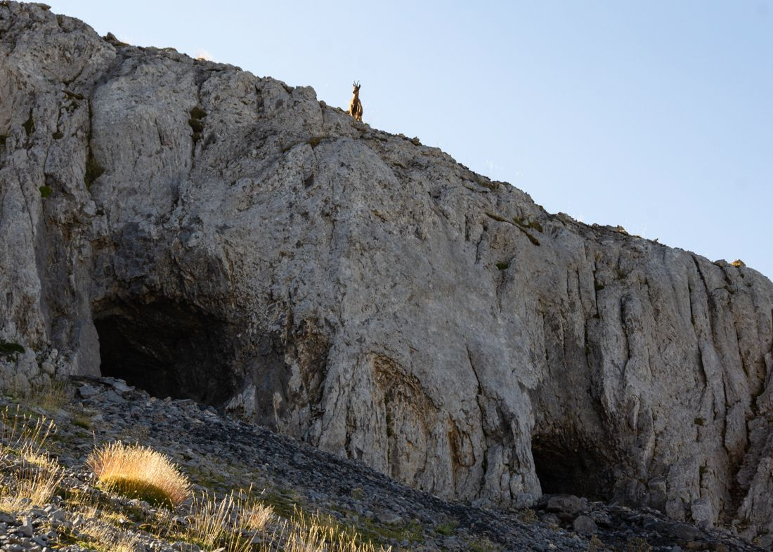 A escasos metros del búnker anterior, un sarrio posa sobre excavaciones en las rocas de Secús. Posiblemente destinadas a almacén de munición y víveres para los ocupantes del búnker de la Loma. búnkeres
