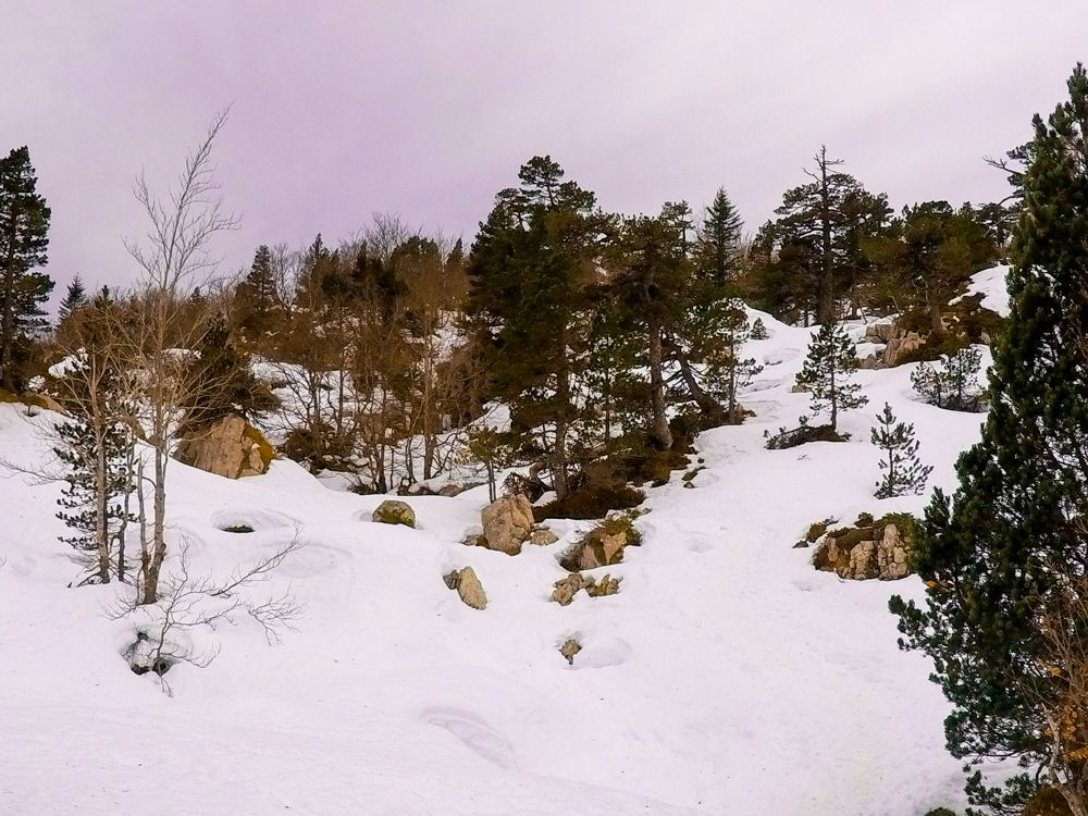 bosque invernal