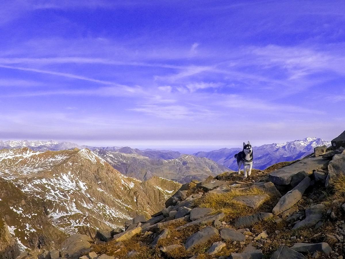 husky pirineo aspe cima norte