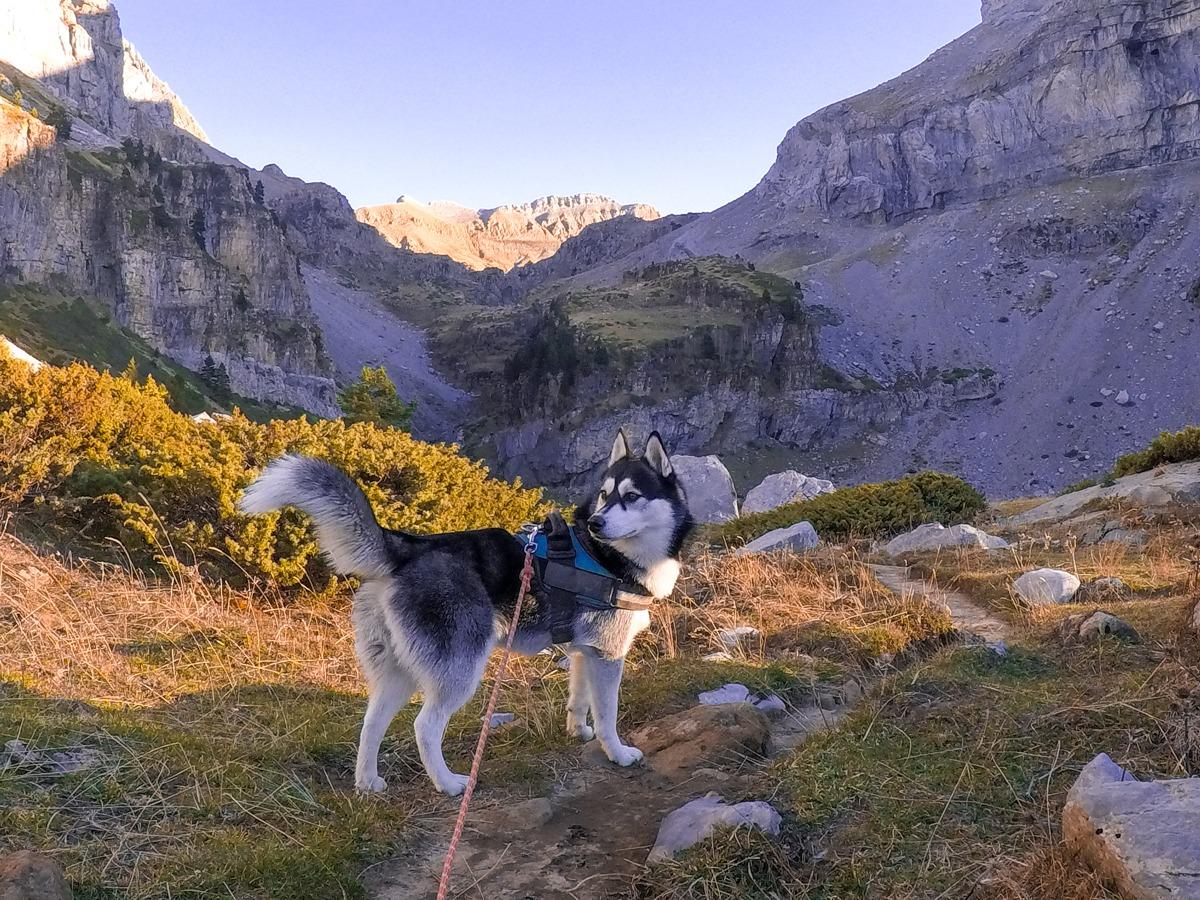husky montaña