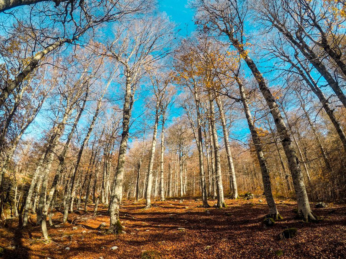 circular ruta bosque gamueta linza anso otoño valle
