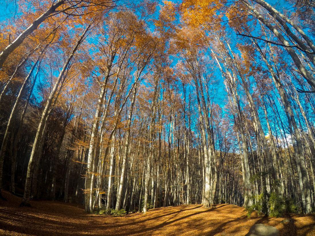 circular bosque del betato