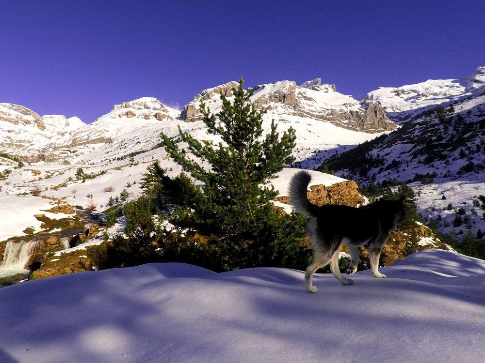 paseo invernal valle pirineo perro husky