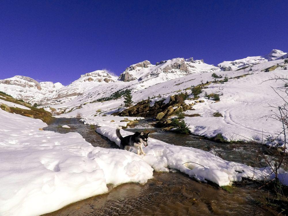 paseo invernal pirineo perro husky