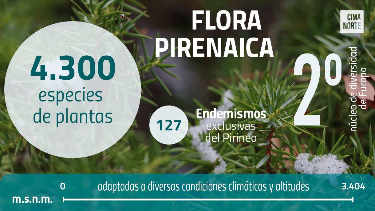 Gráfica flora pirenaica infografia