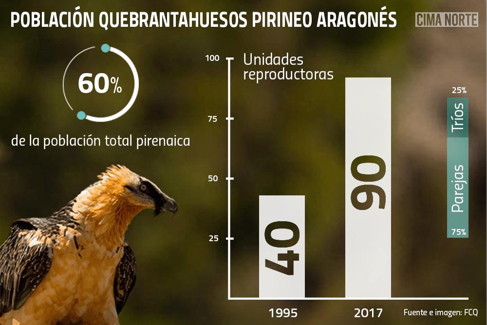 Gráfica población quebrantahuesos pirineo aragonés
