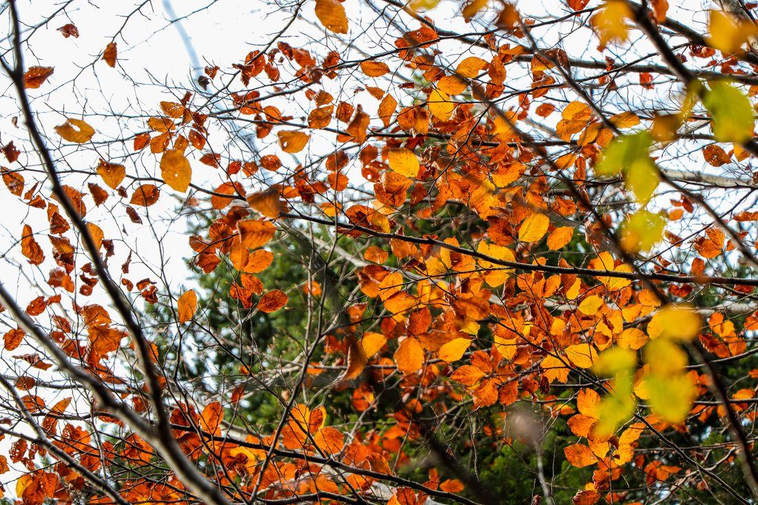 por que las hojas cambian su color en otoño