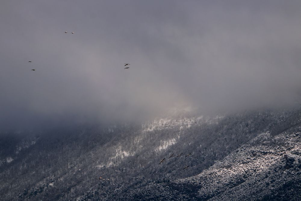 I fiesta de las grullas del Pirineo Artieda 2020