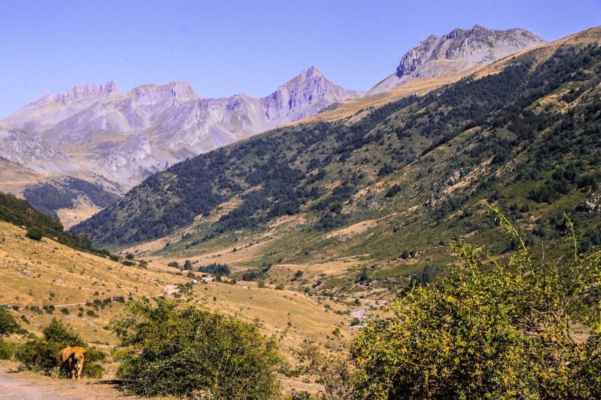 guarrinza