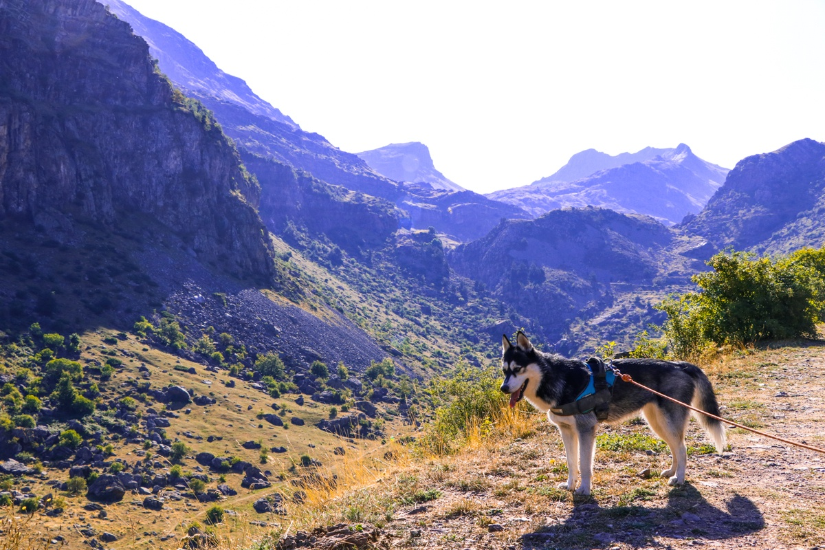 husky pirineo