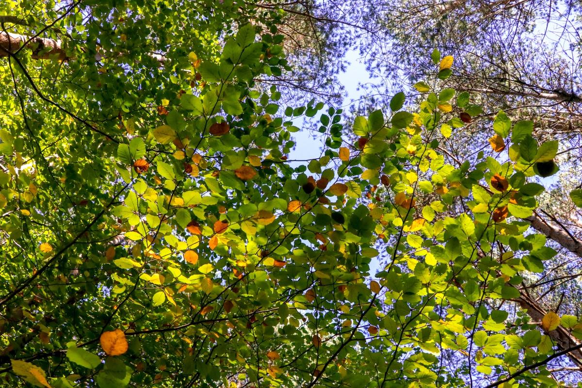 haya otoño hojas