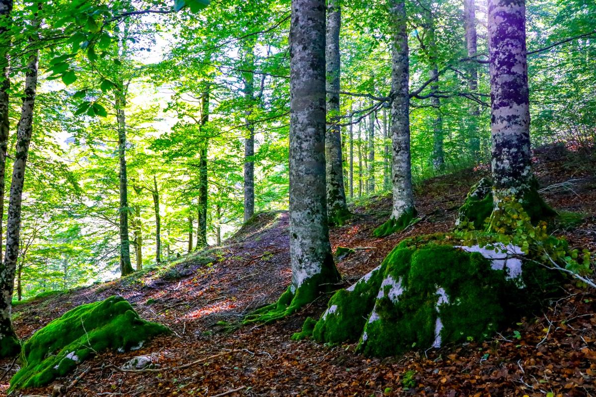 bosque zuriza hayedo otoño alano taxeras