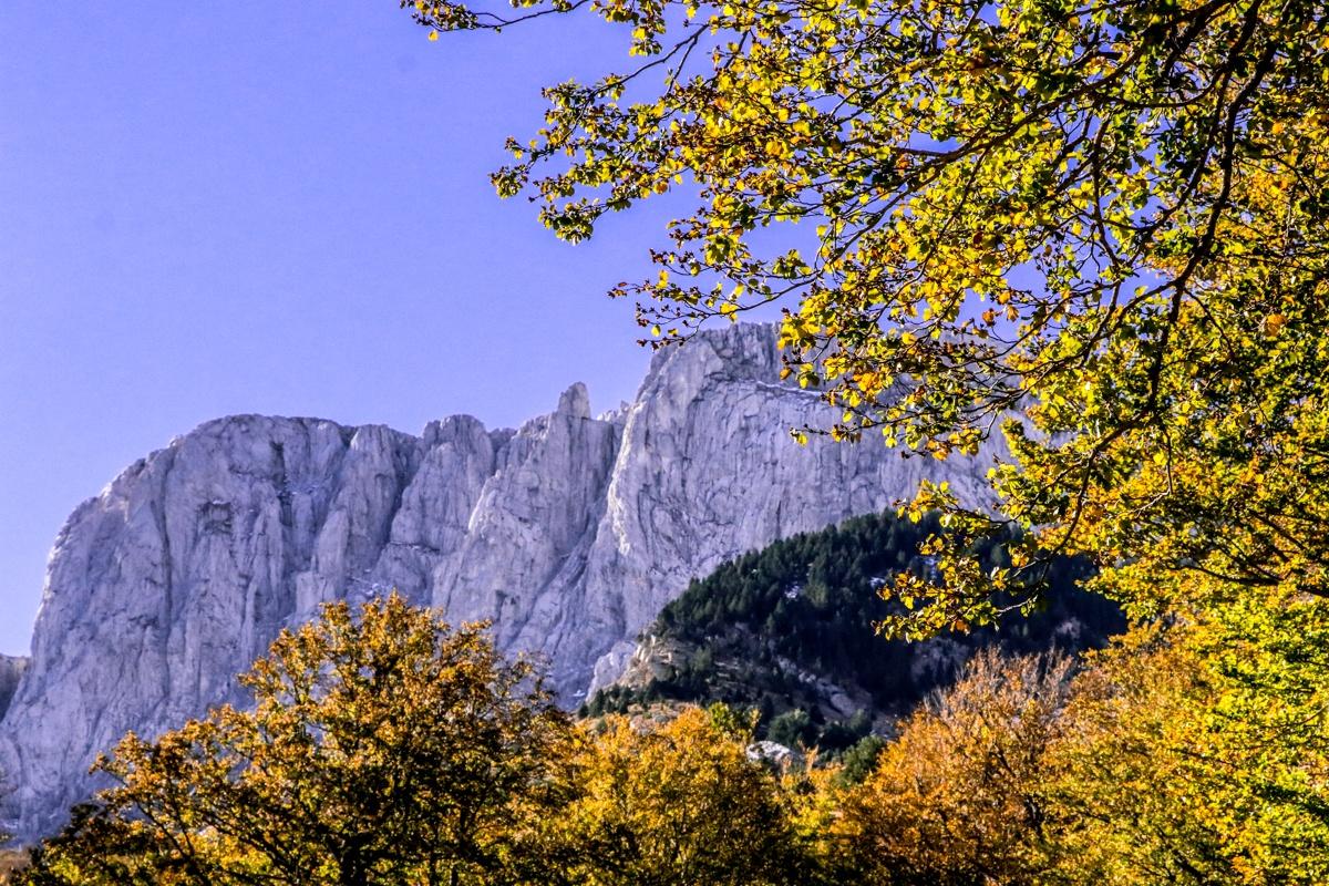 cresta de alano bosque otoño