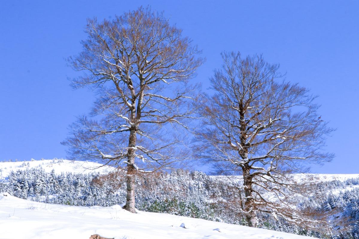 árboles helados