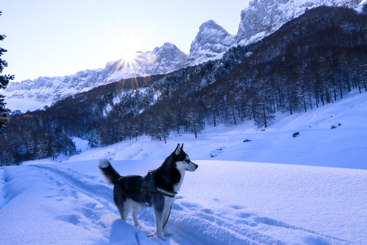 cresta de alano husky pirineo zuriza