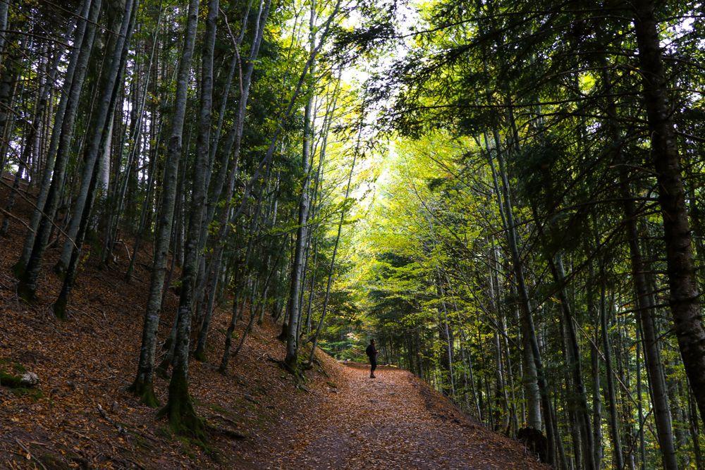 selva de oza otoño