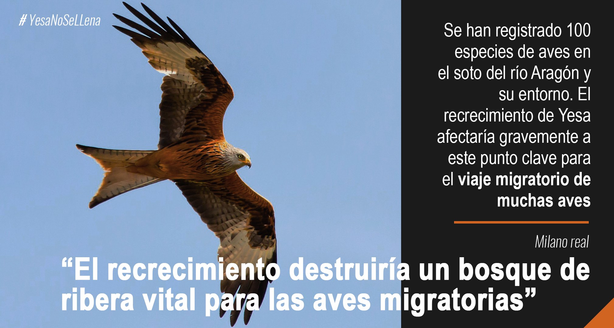 Infografías ambiental Milano recrecimiento