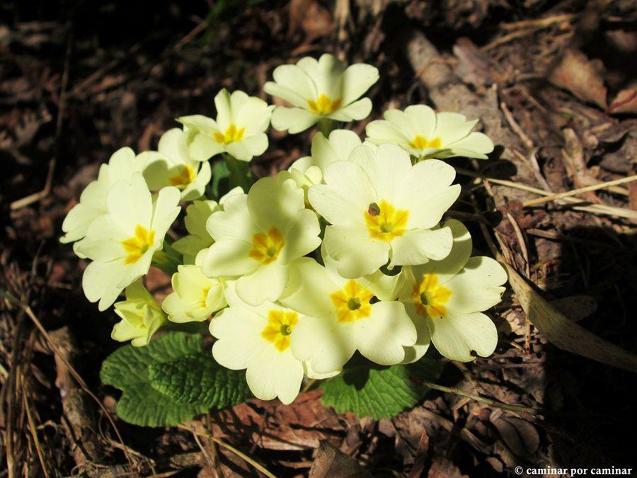 Valle Sorrosal flores