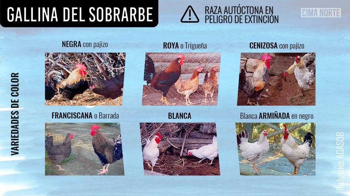 variedades gallina del sobrarbe por color