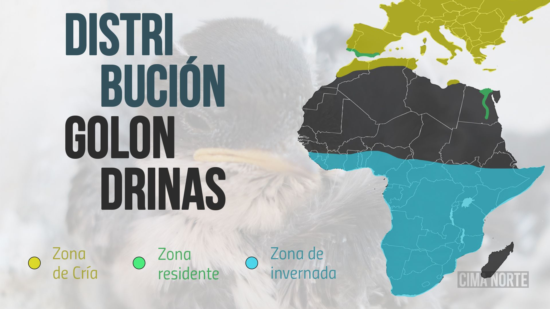 afiche distribución golondrinas mapa migración
