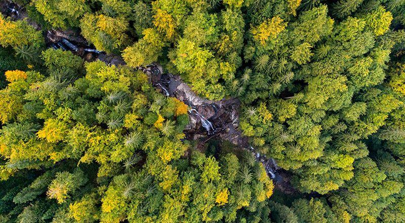 bosque patagonia donaciones