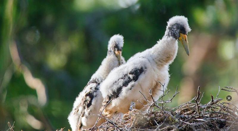 camaras webcams aves europa 1