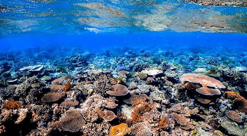 cambio climático patrimonio mundial natural gran barrera