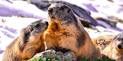 dialecto marmotas