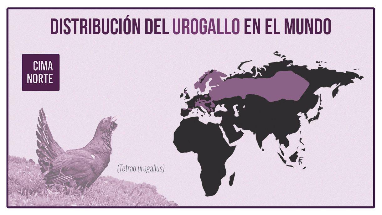 distribución del urogallo en el mundo mapa infografia