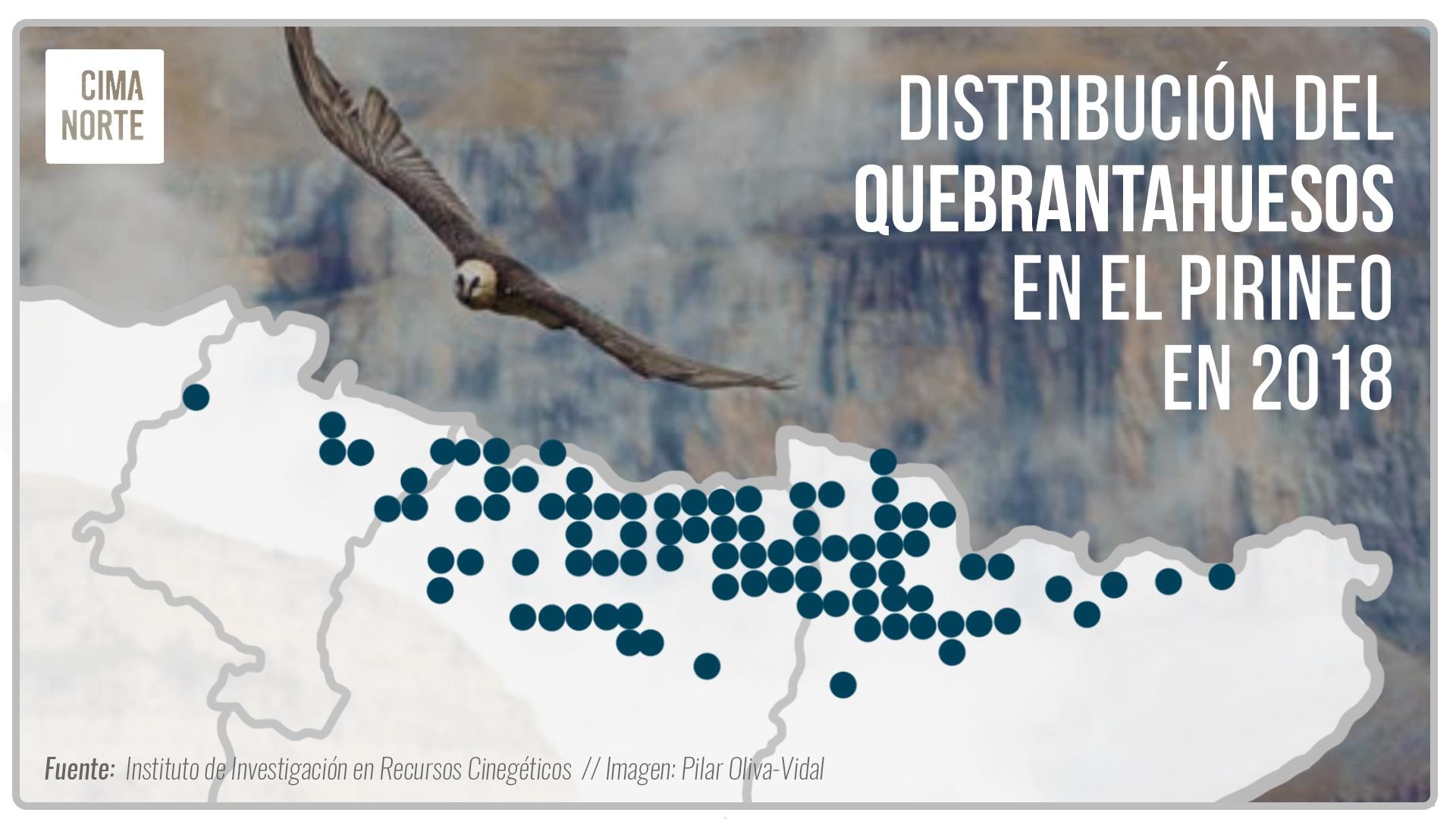 distribucion del quebrantahuesos en el pirineo 2018