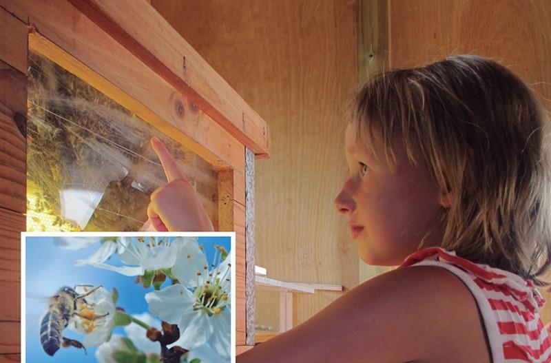 experiencias abejas
