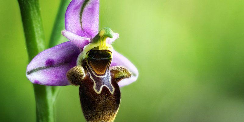 primavera flores orquidea