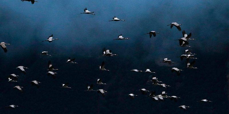 grullas migracion cima norte fotografia aves pirineo