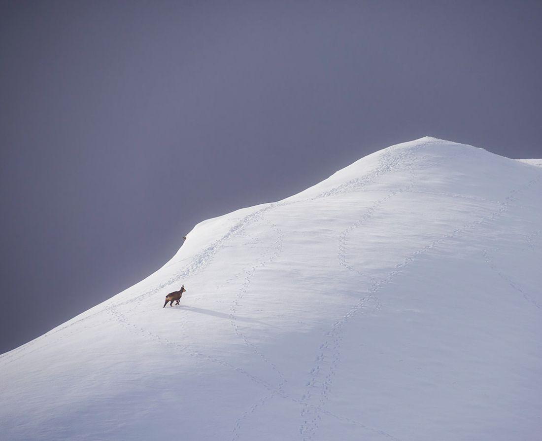 sarrio pirineo
