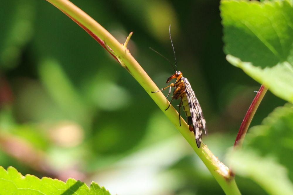 insectos pirineo