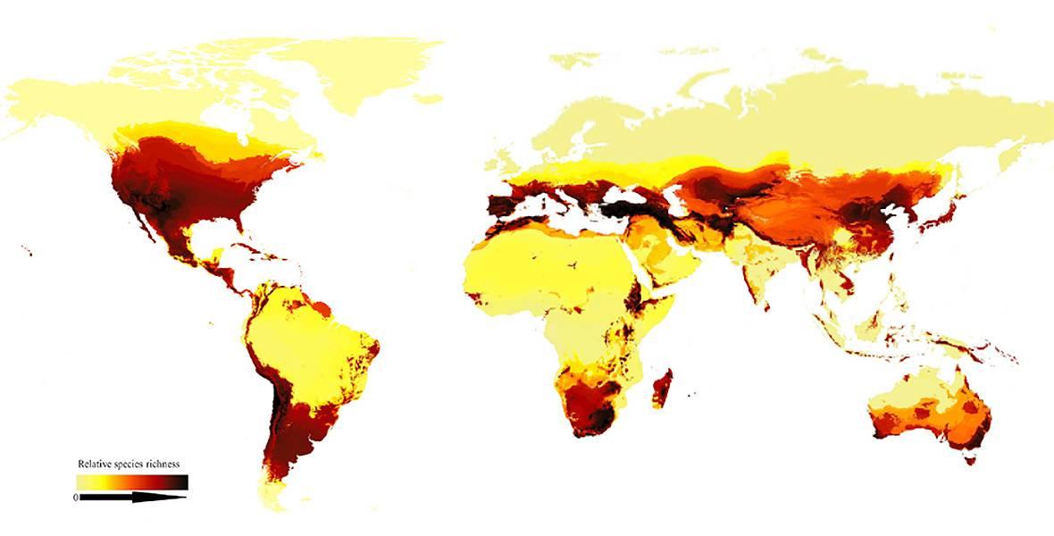 mapa distribucion abejas a nivel mundial