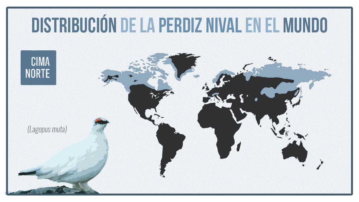 mapa distribución de la perdiz nival en el mundo infografia