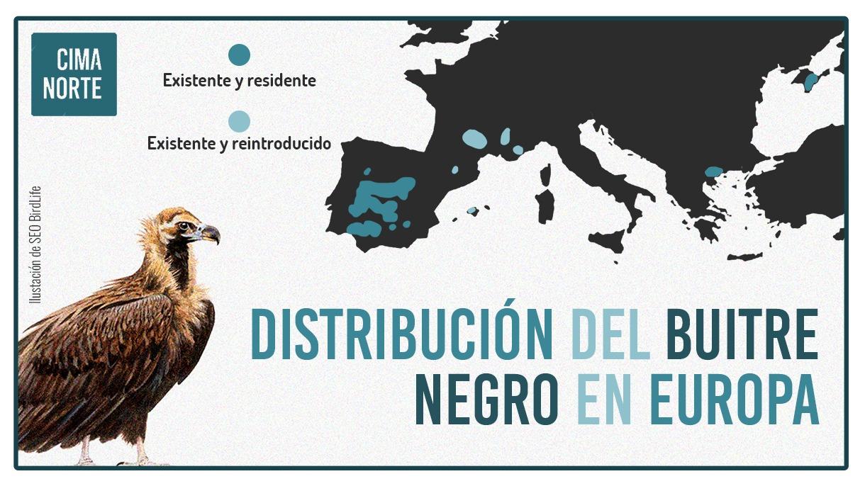 mapa distribucion buitre negro reintroducción