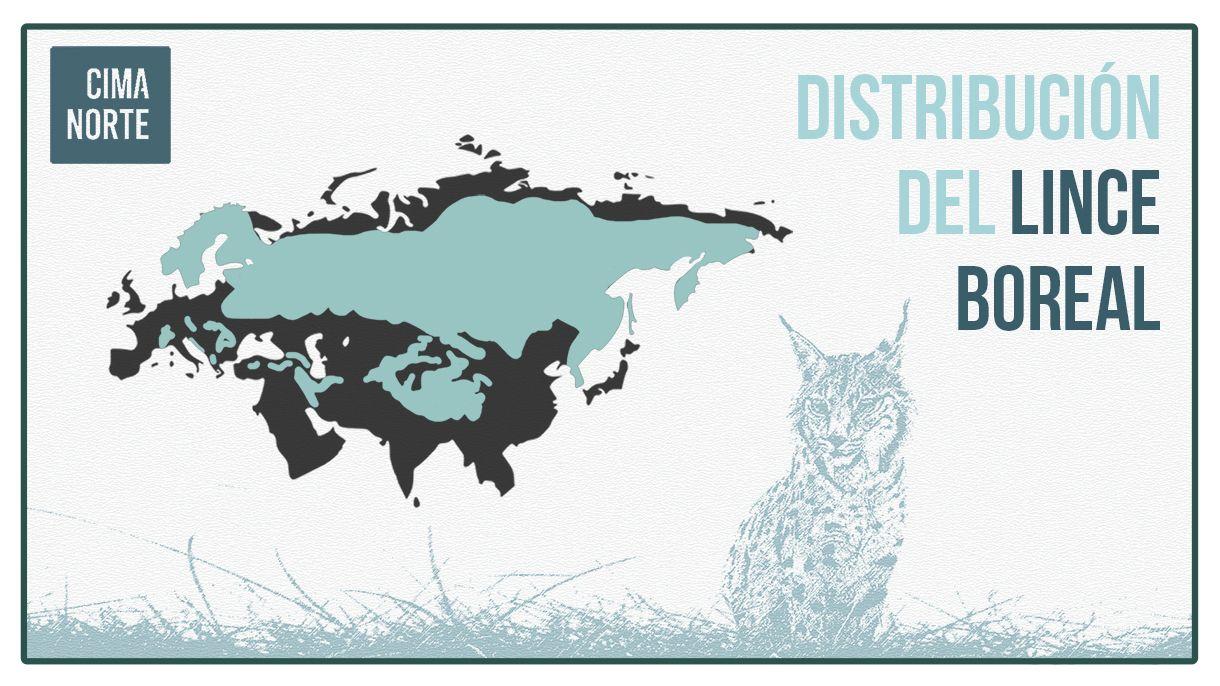 infografía mapa distribucion lince boreal pirineo europeo lynx lynx