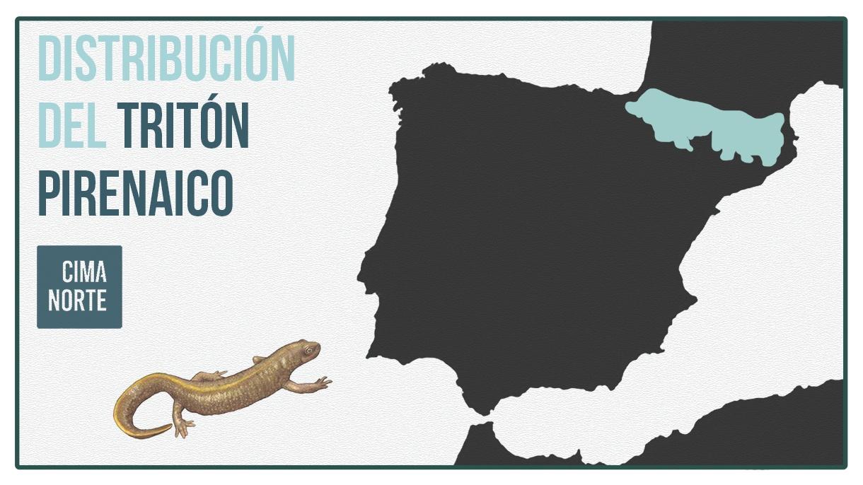 mapa distribucion triton pirenaico