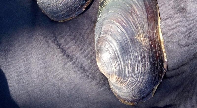 margaritona gobierno de aragón peligro de extinción