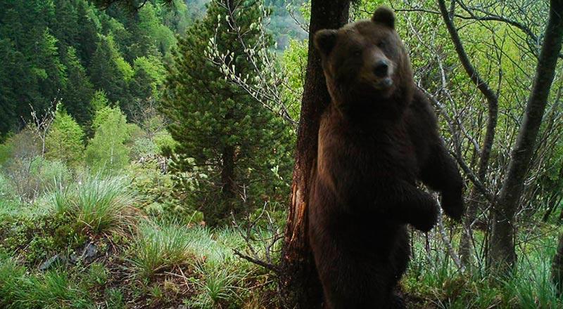 El oso Cachou en una imagen de 2017