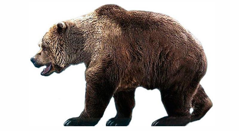 oso de las cavernas península