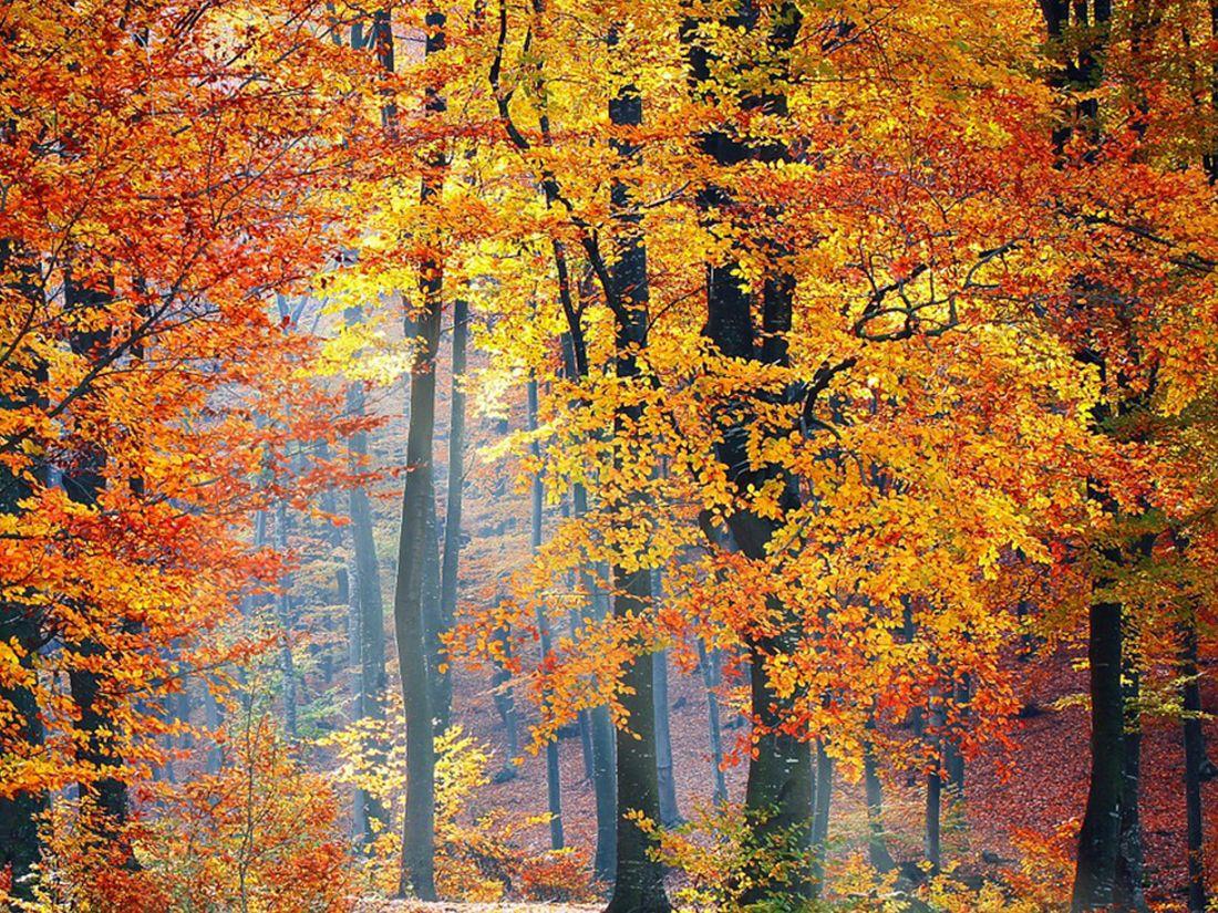 bosques otoño pirineo aragones