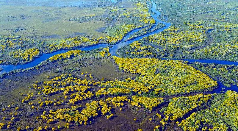 Pantanal de Brasil