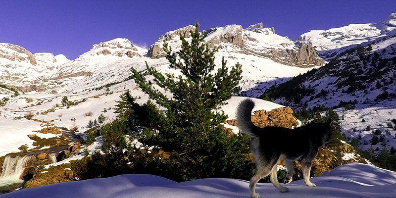 paseo invernal husky